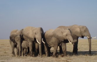 Image of BEST OF EAST AFRICA TAILOR-MADE TOURS