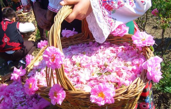 Image of Rose flower festival